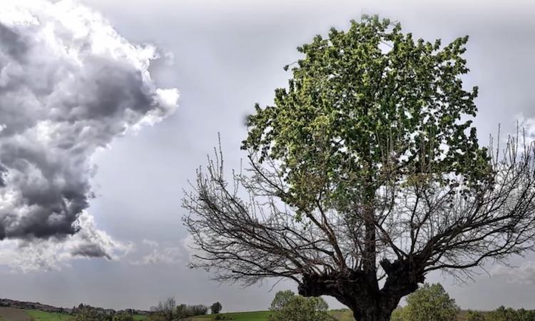 double tree of casorzo
