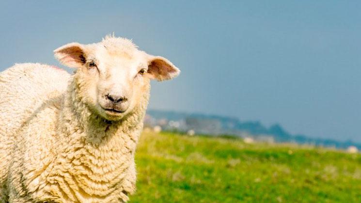 la-primera-oveja