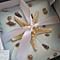 seashell starfish petal fold invitations