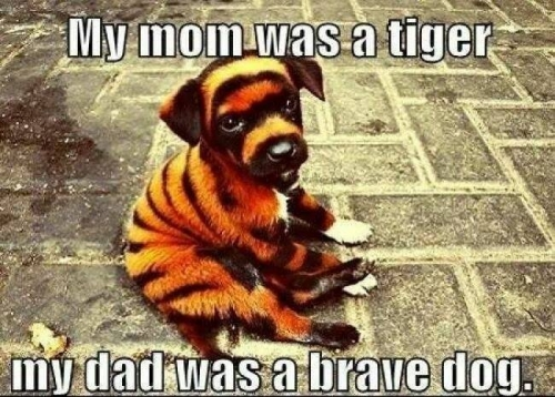 My mom was a tiger, my dad was a brave dog.