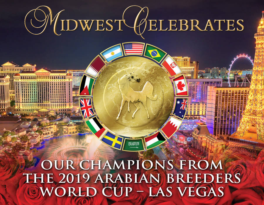 2019 Arabian Breeders World Cup Midwest