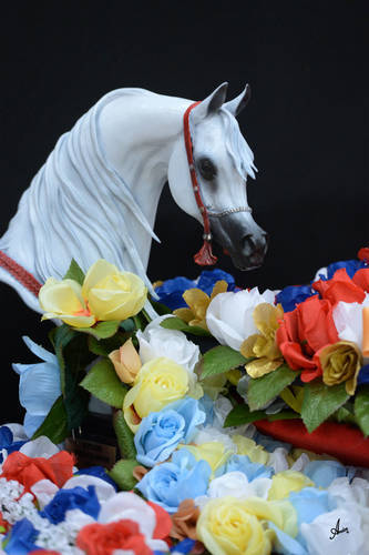 Team Midwest Excels 2015 Arabian Breeders World Cup