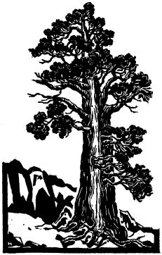 "Glass ""Tree"""