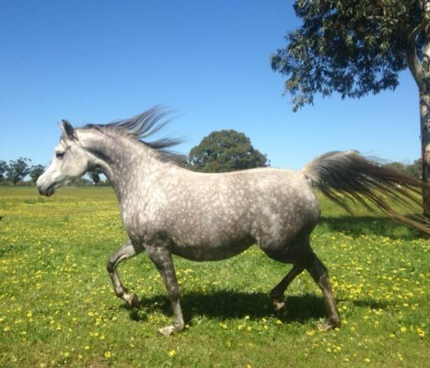 MYSTICA BREEDING PROGRAM COMING TO EUR