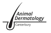 Animal Dermatology Canterbury