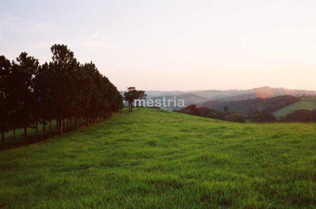 Foto 3 :: DI2460