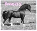 boomer8