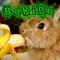 bokiro