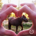 pony lolly