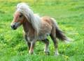 horseking