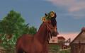 horse sweetie