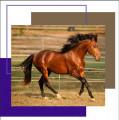 paardenlover2000