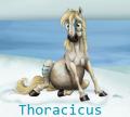 thoracicus