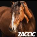zaccic