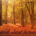 mad about horses