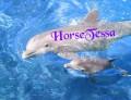 horsetessa