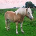 willempie95