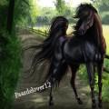 paardelover12