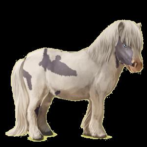 Pony Shetlander Roodbruin