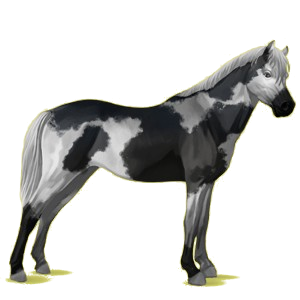 Pony Welsh Donkerbruin