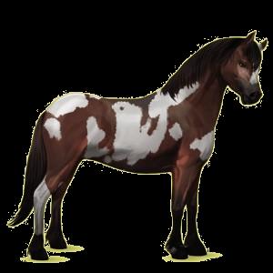 Pony Connemara Bruin