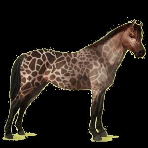 Pony Welsh Kastanje