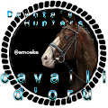 cavalli d'oru