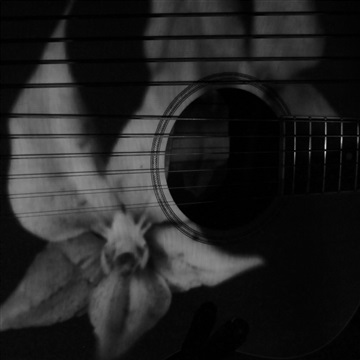 Acoustic Ambient Improvs (1-10) by Ryan Lutton