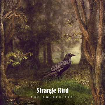 The Aquaerials : Strange Bird