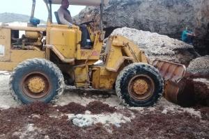 Aruba tambe confronta cu exceso di Sargassum weed