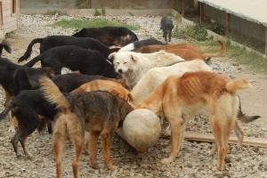'United Dogs Aruba Foundation' cu otro campaña di sterilisacion pa cachonan riba caya