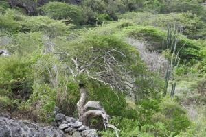Aruba a celebra dia di biodiversidad