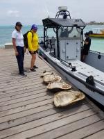 Restonan di tortuga protegi descubri ariba rif
