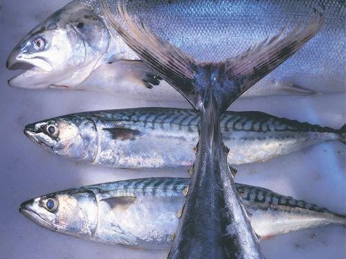Las bondades del pescado