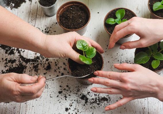5 ideas para cultivar plantas en su hogar