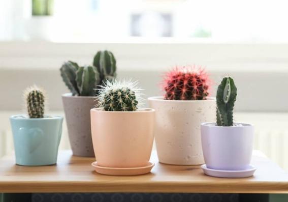 Claves para cuidar sus cactus