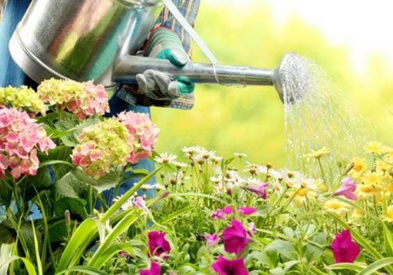 Cómo cuidar las plantas cuando vas a viajar