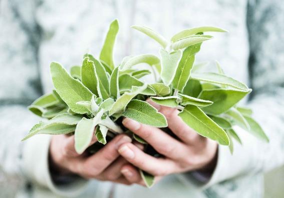 Remedios naturales para calmar los síntomas de la menopausia