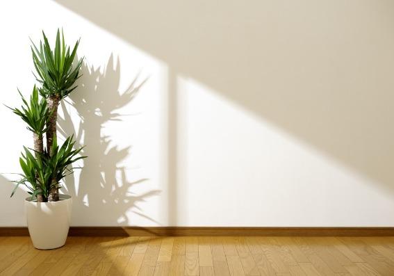 Jardines de interior: 5 ideas para decorar y despejar la mente