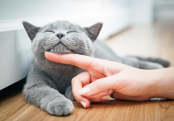 Gato acariciado