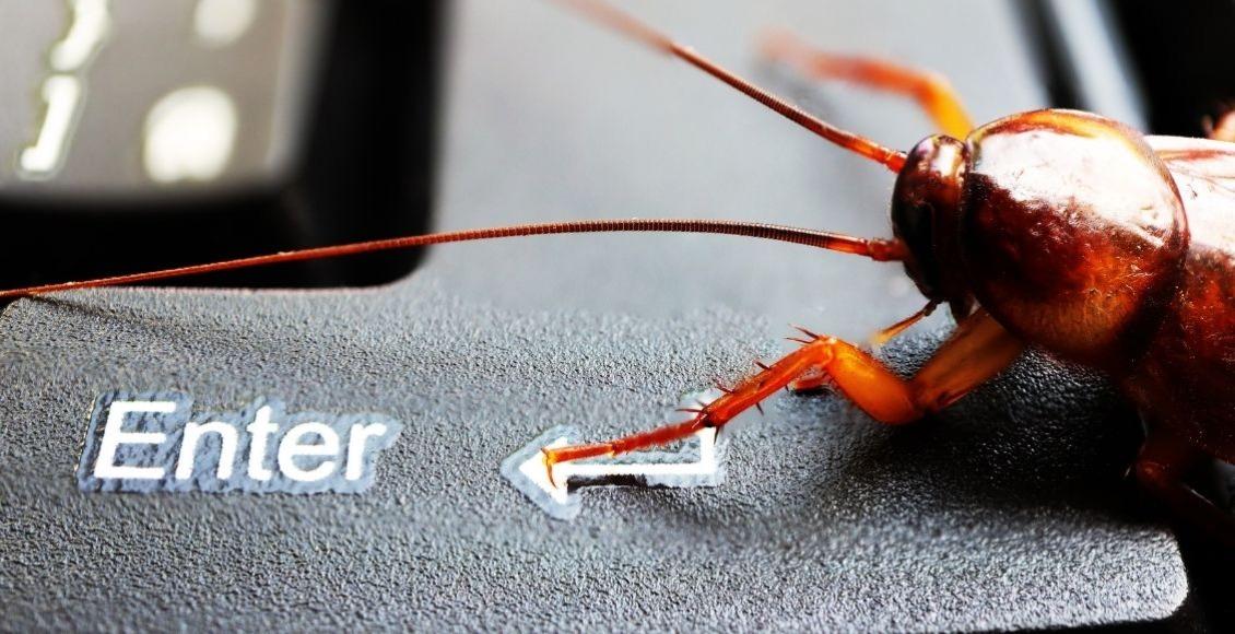 10 curiosidades de las cucarachas que debe conocer