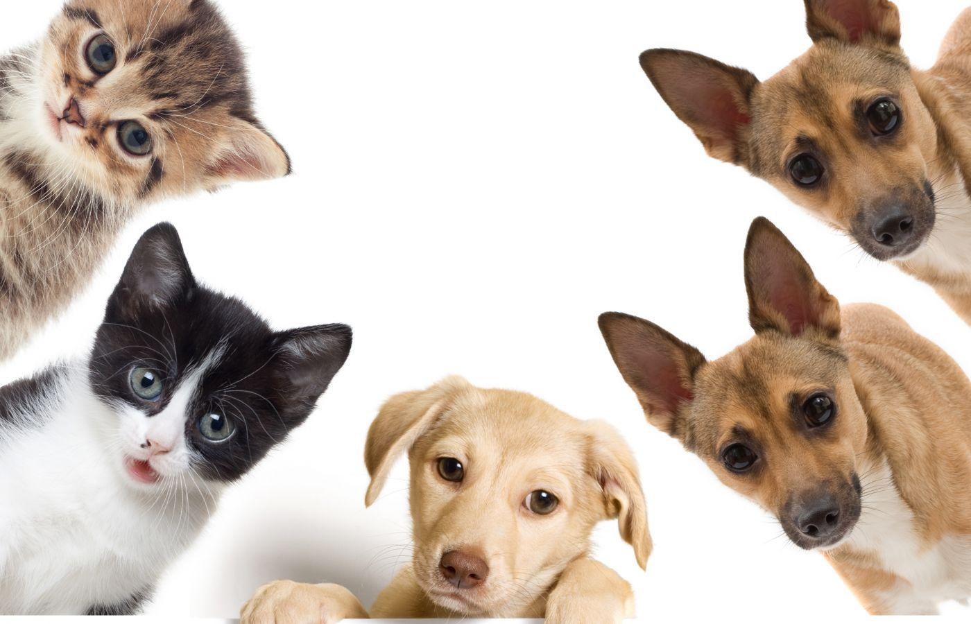 7 consejos para tener mascotas sanas y contentas