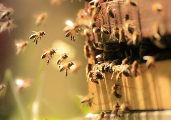 Miel: el endulzante que nos regala la abeja