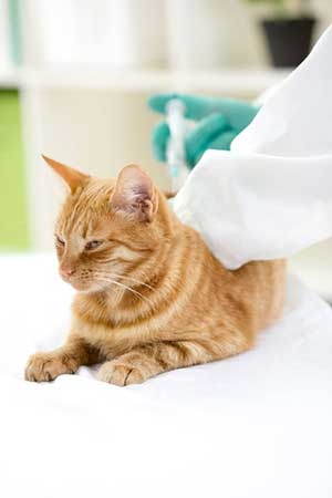Vaccine Services at Andover Animal Hospital
