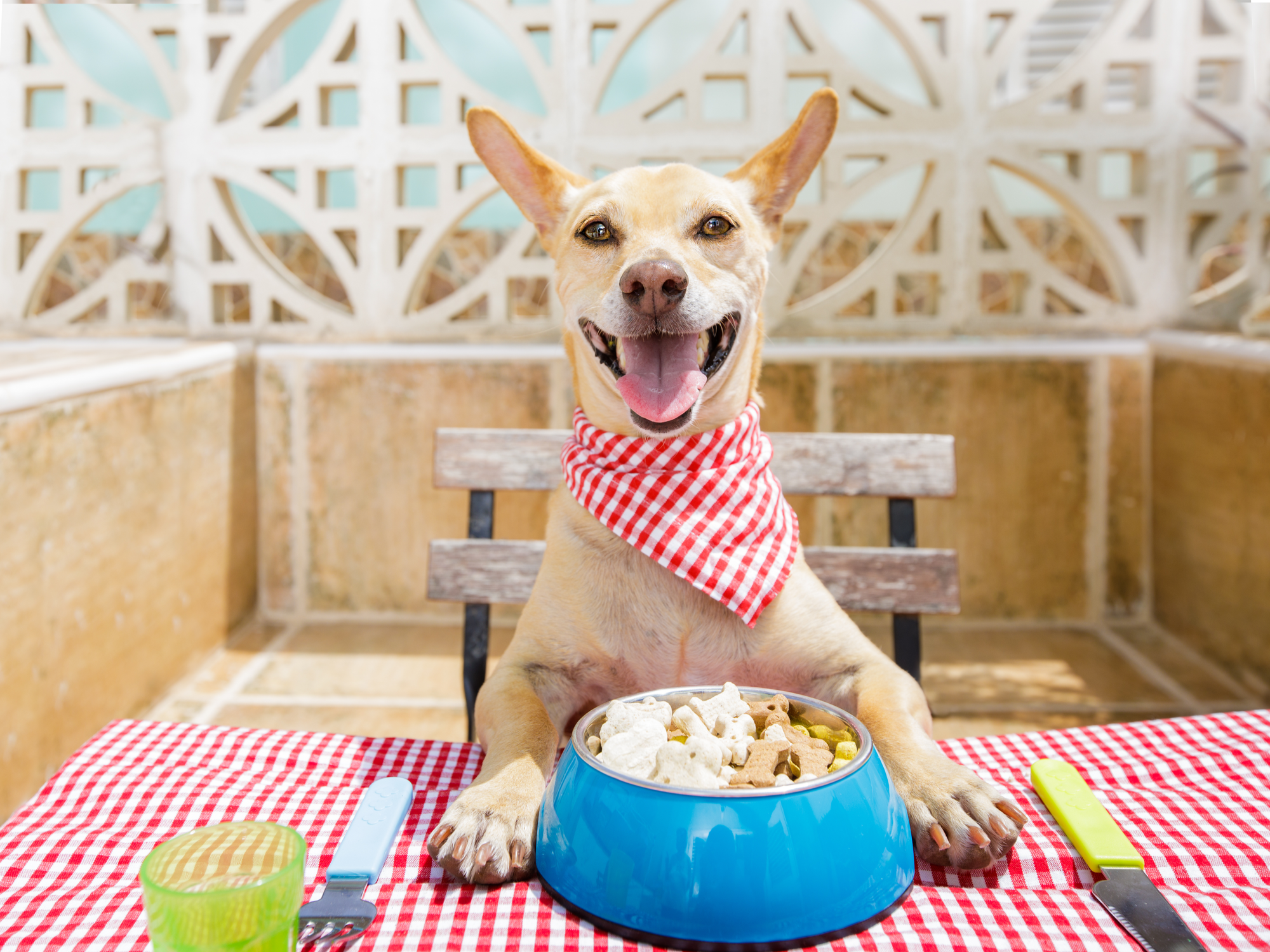 Importance of Nutritional Counseling for Pets