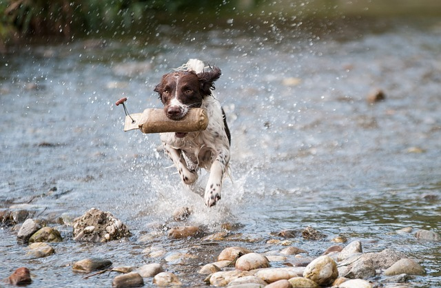 Leptospirosis Vaccination Recommendation for Dogs