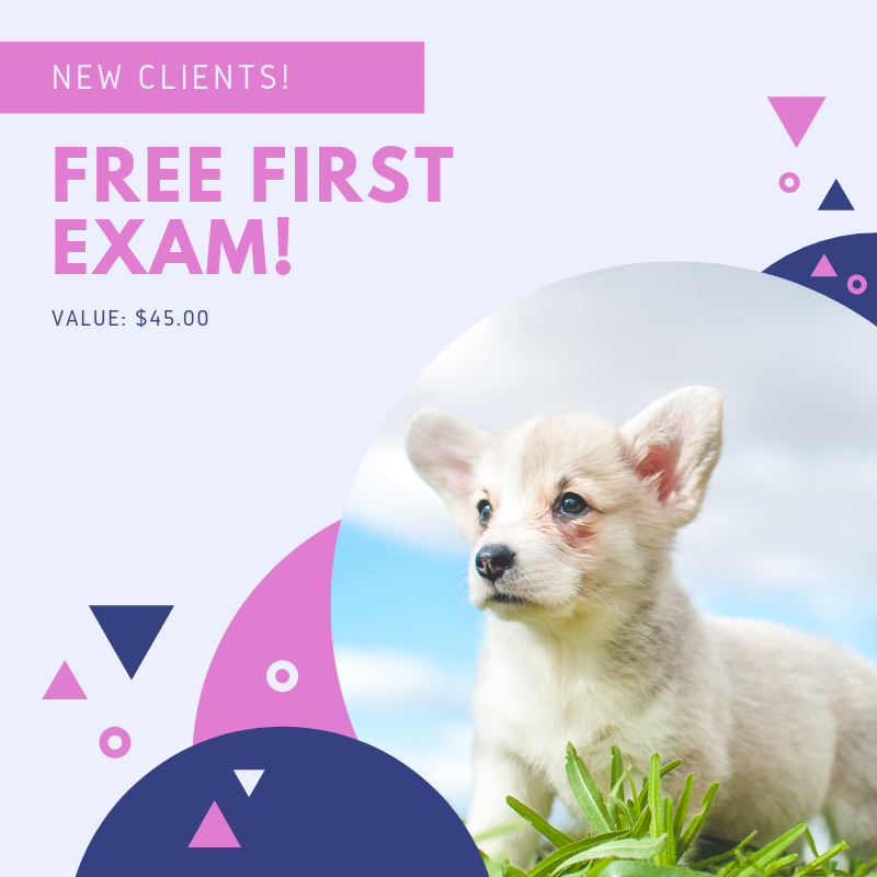 FREE FIRST VET VISIT NEAR ME