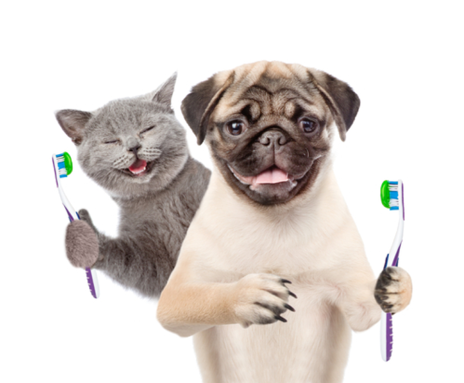 Pet Dentist in Pensacola