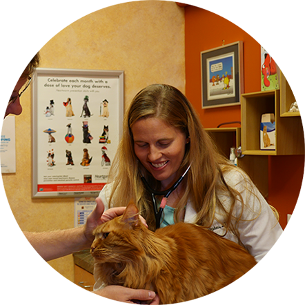 Feline Friendly Animal Hospital at Nippers Corner