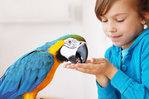Basic Pet Bird Care